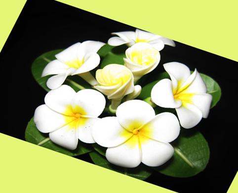 Ít ai ngờ rằng hoa sứ có thể chữa viêm mũi dị ứng hiệu quả